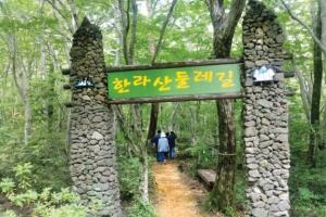 원시림 62.7㎞…걸을수록 솟는 울창한 생명력