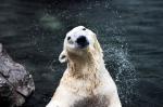 국내 유일 북극곰 '통키…
