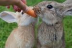 """""""토끼한테 당근은 해롭다…"""