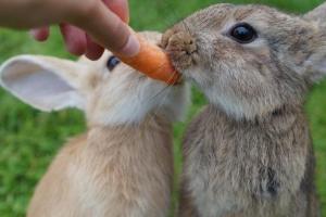 """""""토끼한테 당근은 해롭다""""…충격에 빠진 토끼 주인들"""