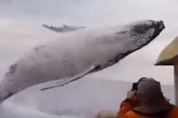 혹등고래, 수면 위로 뛰어오르는 순간 포착