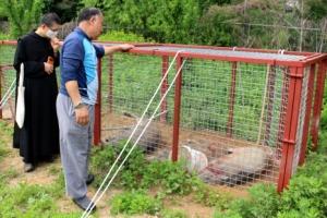 70대 농부가 멧돼지 한꺼번에 6마리를 생포한 방법