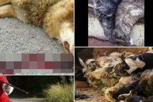2018 러시아 월드컵…수천 마리 개들이 죽어가는 이유?