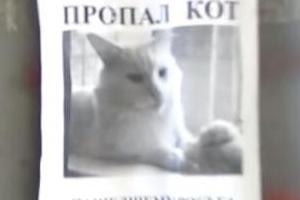 실종 전단지 속 고양이 얼굴이 움직인다?