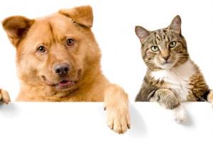[반려독 반려캣] 개는 기름진 음식 좋아해…고양이는 탄수화물 선호