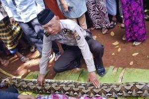 인도네시아서 밭일하던 여성, 7m 비단뱀 뱃속서 숨진채 발견