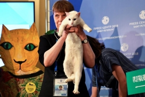 러시아 월드컵 승리팀 예측하는 점쟁이 고양이