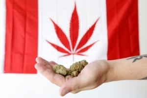 캐나다 '기호용 마리화나' G7국가 중 첫 전면 합법화