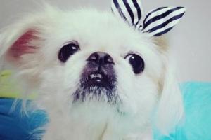 [김유민의 노견일기] 마지막까지 예뻤던 나의 늙은 강아지