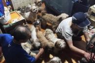 [특별한 동행] 애니멀 호더로부터 구조된 개들의 끝나…