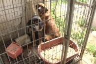 [특별한 동행] 사람 싸움에 죽어가는 개들