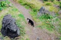[100초 인터뷰] 길고양이 찍는 사진작가 이야기