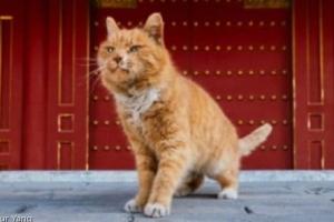 돈 따게 해준 '점쟁이 고양이' 사망..중국서 애도물결