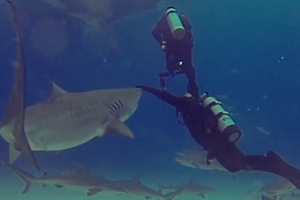 동료 공격하려는 상어 막아내는 베테랑 다이버