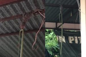 거꾸로 매달려 뱀 먹방하는 도마뱀