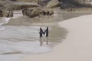 해변 산책하는 로맨틱한 펭귄 커플