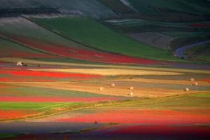 [포토] 황홀한 색채…자연이 그린 그림