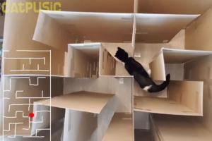 고양이 지능 얼마나 좋은가 봤더니…