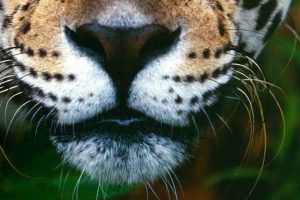동물원에서 탈출한 재규어, 알파카 등 무차별 공격