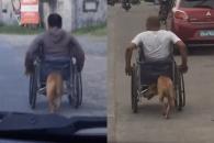 휠체어 탄 주인 도와주는 견공 화제