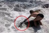 파도에 휩쓸린 상어 맨손으로 구한 소녀