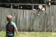 반려견과 공놀이로 교감하는 3살 아이