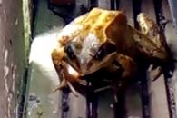 """""""맛없어!"""" 지렁이 토해내는 개구리"""