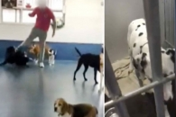 '사랑을 발길질로' 동물학대하는 英 개보호센터 직원…
