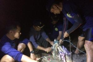 태국 관광지 푸껫 악어 공포 사라졌다…당국 11일만에 포획