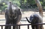 '무더위 피하는 코끼리 …