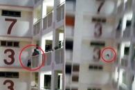 11층 난간에 갇힌 고양이 구조 실패 순간