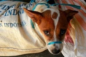 [김유민의 노견일기] 인도네시아가 개·고양이 식용을 금지한 이유