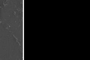염전에서 피부보호물질 만드는 원생동물 발견