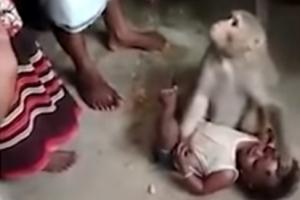 아이 납치하려는 원숭이
