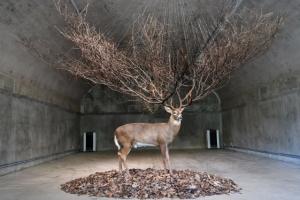 탄약고에 뻗은 평화의 예술… 反戰의 반전