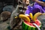 '과일 먹으며 말복 더위…