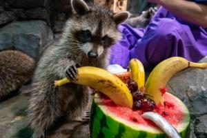 [포토] '과일 먹으며 말복 더위 이겨내요~'