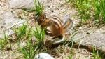 다람쥐-누룩뱀 대결, 승자…