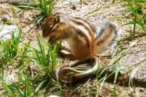 [포토] 다람쥐-누룩뱀 대결… 승자는?