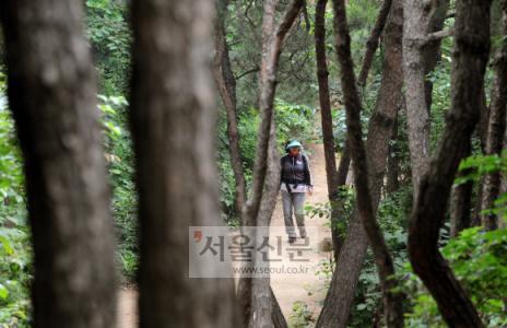 불곡산은 숲이 울창해 여름 한낮에도 시원하게 산행을 즐길 수 있다. 한 등산객이 나무숲 사이로 난 등산로를 호젓이 걷고 있다.  도준석기자 pado@seoul.co.kr