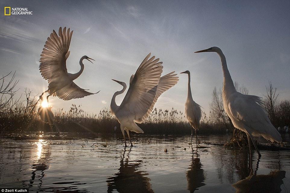 내셔널지오그래픽 선정 '2016 올해의 자연 사진가' 액션 부문 3등상
