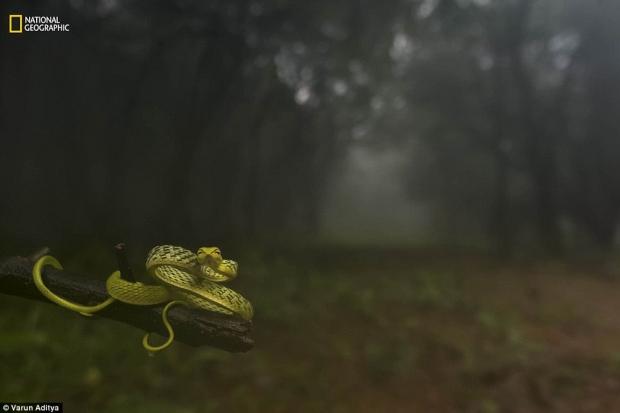 내셔널지오그래픽 선정 '2016 올해의 자연 사진가' 동물 부문 1등상