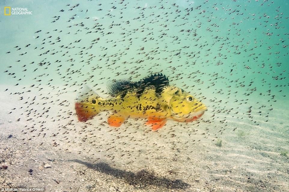 내셔널지오그래픽 선정 '2016 올해의 자연 사진가' 동물 부문 2등상