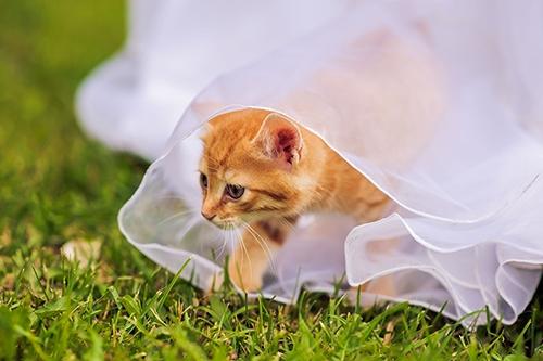 결혼 대신 고양이 권하는 사회