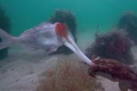 오징어의 뛰어난 사냥 실력, 과연 어느 정도?