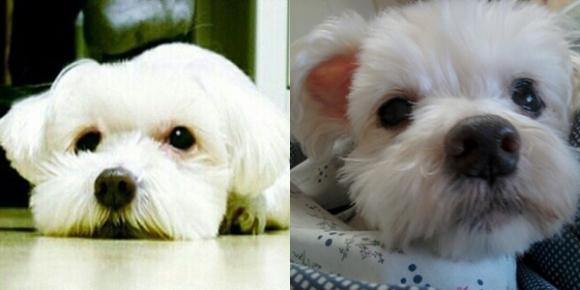 [노견일기] 사랑을 가르쳐준 나의 강아지, 백희