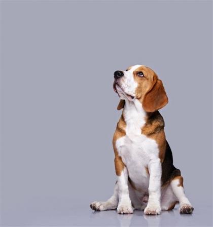 1인 가구 증가와 함께 반려동물을 가족으로 삼는 펫팸족이 증가하는 가운데, 반려동물을 둘러싼 법적 공방이 끊이지 않고 있다. 출처 123rf