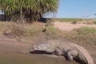 강가 쉬고 있는 5m 악어에 강태공들 화들짝