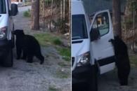 사람처럼 차량 문 열고 운전석 탑승한 야생곰