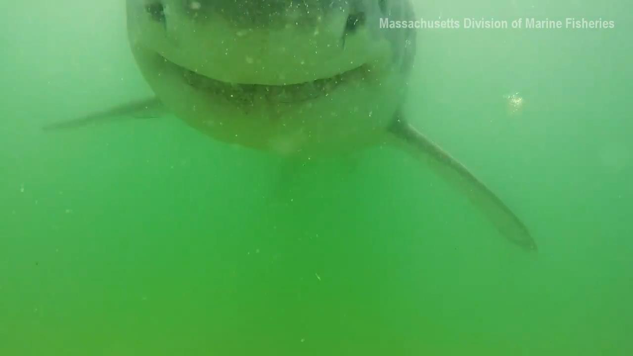 사진=미국 매사추세츠주 해양수산부